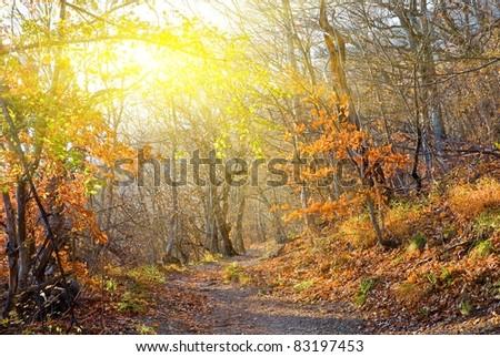 evening autumn forest