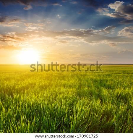 evening green fields #170901725