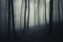 evening in a dark forest with fog
