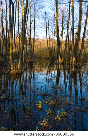 Evening in flooded oak forest at spring time