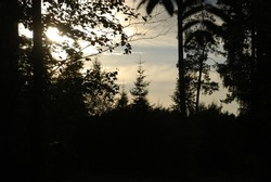 Evening in the forest outlines of trees. The evening sun illuminates the branches and tops of trees, outlining their outlines against a bright sky with clouds.