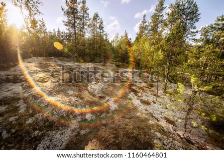 Stock Photo Evening in the northern summer forest. Bright wide angle image with sunlight and rainbow colored lens flare. Karelia, Russia