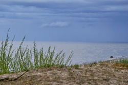 Evening landscape over grassy sand dunes on beach. Selective focus. High quality photo