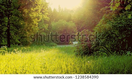 Evening landscape with the sun, greenery and a swarm of mosquitoes. #1238584390