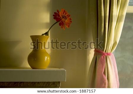 Evening light on a flower.