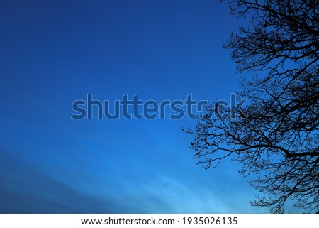 Evening photo. Dark oak tree branch against a blue sky. Close up. Plenty of area for copy space. Swedish nature.  Photo stock ©