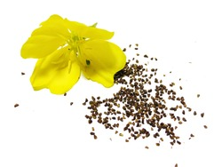 evening primrose flower and seeds - Oenothera biennis isolated on white background