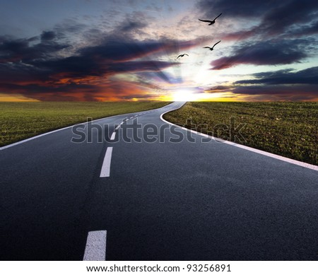 Evening road with flying birds