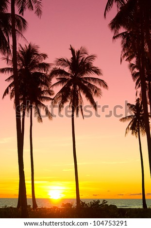 Evening Scene Coconut Horizon