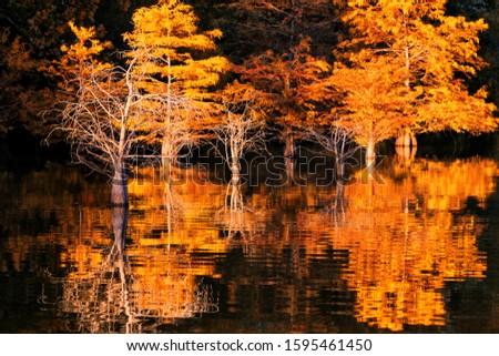 Evening Shoreline Percy Priest Lake near Smyrna Tennessee
