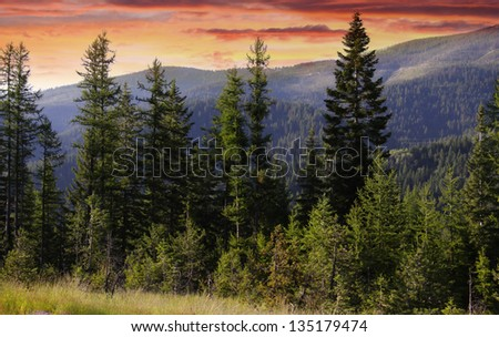 Evening sky and pine trees  in Glacier national park #135179474