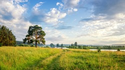 evening summer landscape with a tree on the riverbank, Russia, Ural