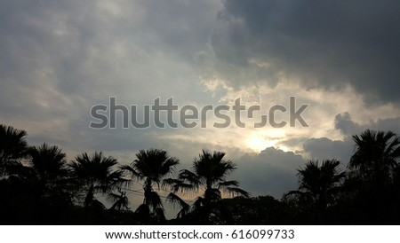 Evening sun and sky over palm trees