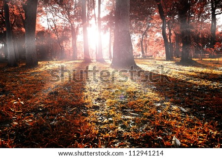 Evening sunshine in forest resolve a beautiful autumn tints.