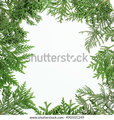 ever green fir tree decoration for christmas card isolated, new year pattern, copyspace white