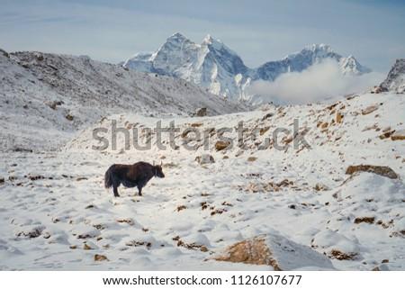 Everest Base camp trek nepal #1126107677