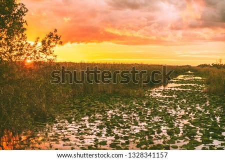 Everglades Florida wetland, Airboat excursion tour at Everglades National Park at sunset. Nature landscape. USA destination for tourism.