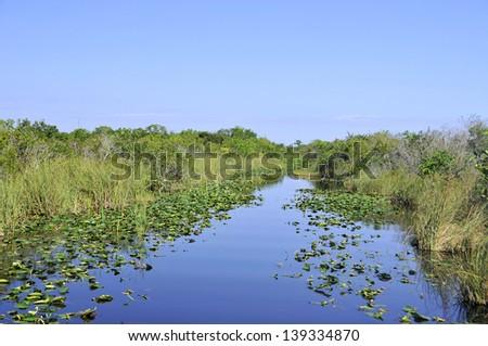 Everglades landscape Florida