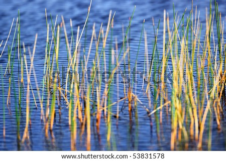 Everglades sawgrass and pond in the Florida Everglades - stock photo