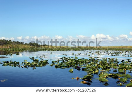 Everglades wetland in Florida