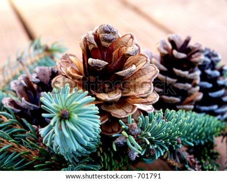 Evergreen branches and pine cones. - stock photo