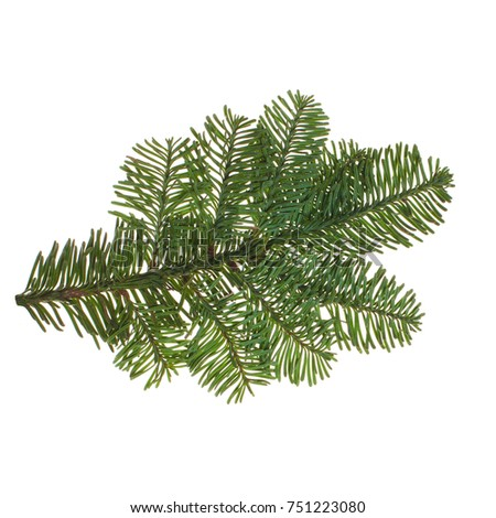 Evergreen Christmas Tree Twig Isolated on White Background. Green Fir on White #751223080