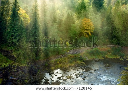 Evergreen forest in sun rays in Pacific Northwest, Washington