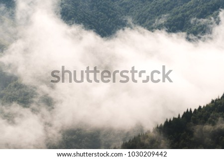 Evergreen Forest Overview - Tops of Tall Green Trees with Dense Fog Rolling In Over Lush Wilderness #1030209442