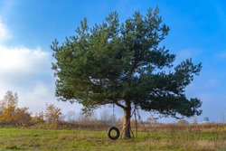 evergreen tree with tire swing of the middle of the field on a background of blue sky
