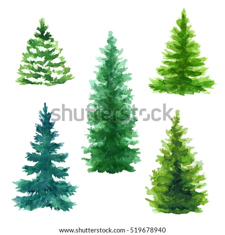 evergreen trees clip art set, Christmas fir trees illustration, nature, conifer, rural landscape, outdoor plants, isolated on white background