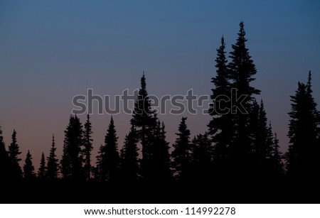 Evergreen Trees silhouetted on a twilight sky; alpine trees at Glacier National Park, Montana; abstract background nature photography