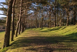 Evergreen trees with long shadow in Parc Llewelyn in Swansea, Wales, UK