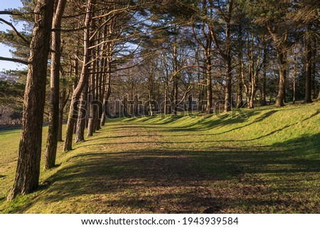Evergreen trees with long shadow in Parc Llewelyn in Swansea, Wales, UK Photo stock ©
