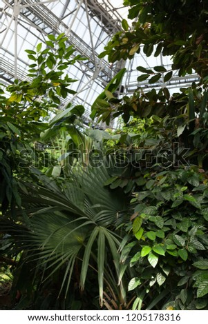 Evergreen tropical plants in a tropical greenhouse. #1205178316