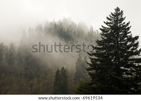 Evergreens, Autumn, Fog, Great Smoky Mountains National Park, TN-NC