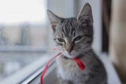 Evil looking cute kitty kat