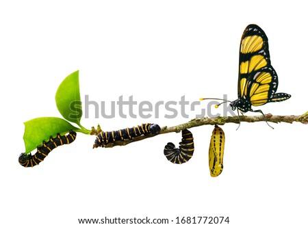 evolution metamorphosis caterpillar to butterfly on leaf