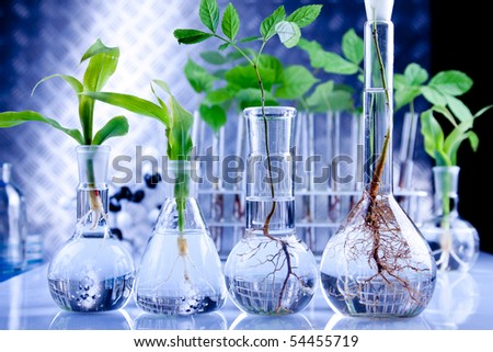 Examine the plants, experimenting with flora in laboratory