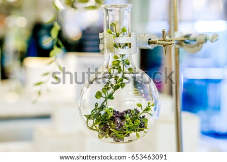 Examples of herbs in glass bottles for drug and cosmetics extraction with stand flask holder.