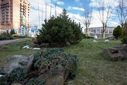 Examples of landscaping with conifers in the city and park. Conifers in landscaping and urban landscaping.