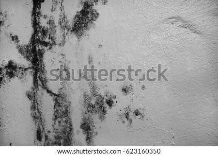 Excessive moisture can cause mold and peeling paint wall , such as rainwater leaks or water leaks. #623160350