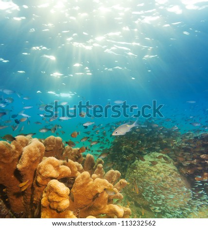 exciting underwater panorama with corals, fish schools, and sunlight
