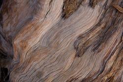 Exfoliating furrowed grey brown aging bark of California Juniper, Juniperus Californica, Cupressaceae, native evergreen arborescent shrub in Joshua Tree National Park, Southern Mojave Desert, Winter.
