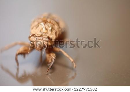 Exoskeleton of a locust. Taken in North Carolina.