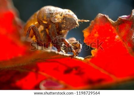 exoskeleton shed by a cicada