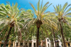 Exotic Architecture And Tropical Street Palm Trees Downtown Barcelona City