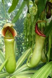 Exotic Australian flora found in the subtropical rainforest.