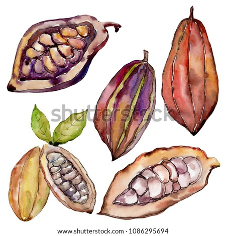 Exotic baobab healthy food in a watercolor style isolated. Full name of the fruit: baobab. Aquarelle wild fruit for background, texture, wrapper pattern or menu.