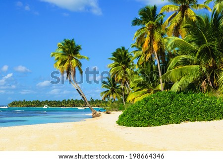 Exotic beach with a lot of palm trees and white sand