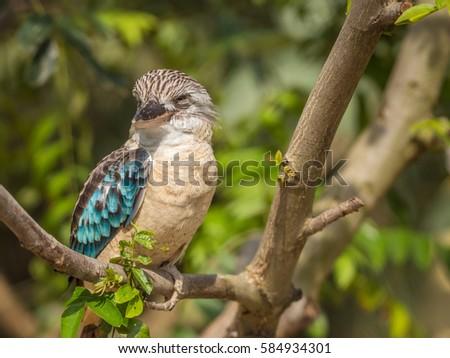 Exotic bird #584934301
